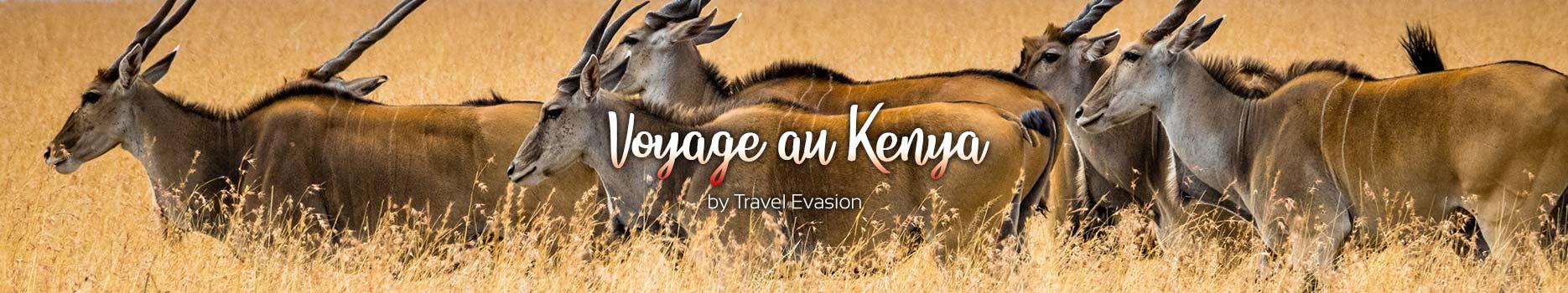 Un voyage au Kenya et le safari dans le Masai Mara et Amboseli